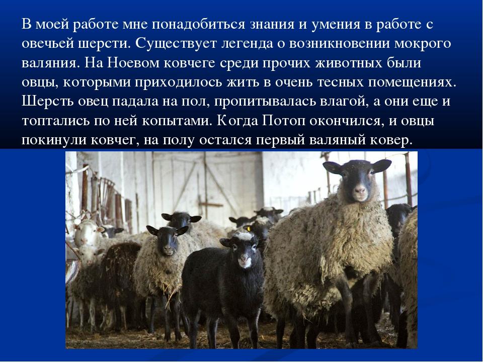 В моей работе мне понадобиться знания и умения в работе с овечьей шерсти. Сущ...
