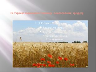 На Украине выращивают пшеницу , подсолнечник, кукурузу.