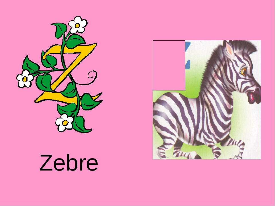 Zebre http://urazimbetov.jimdo.com/