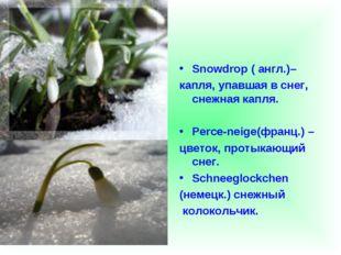 Snowdrop ( англ.)– капля, упавшая в снег, снежная капля. Perce-neige(франц.)