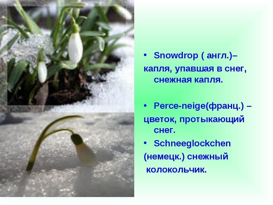 Snowdrop ( англ.)– капля, упавшая в снег, снежная капля. Perce-neige(франц.)...