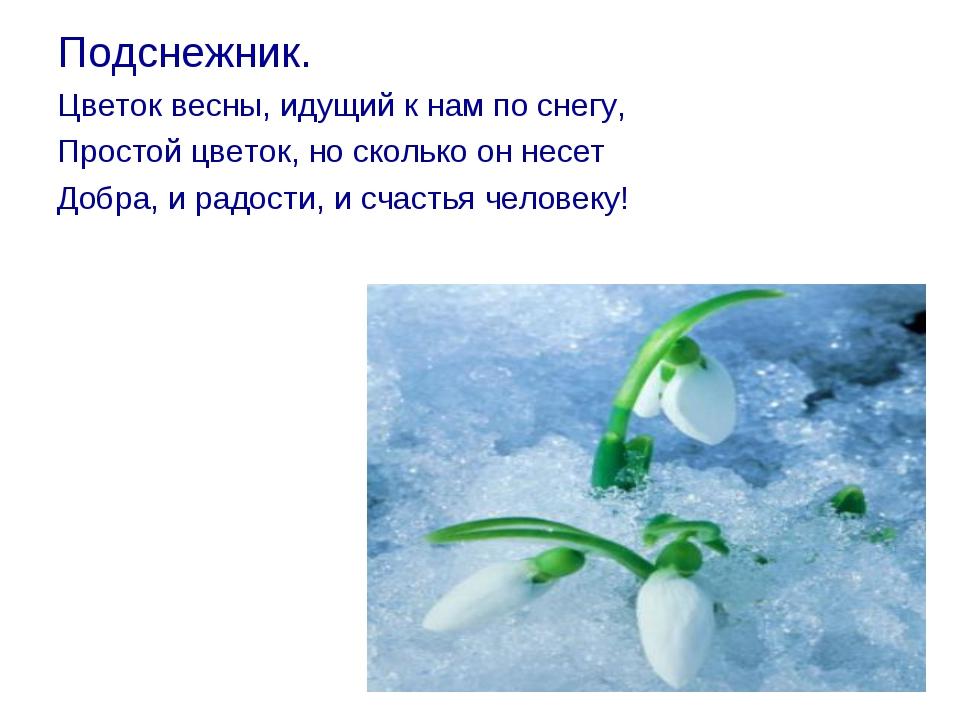 Подснежник. Цветок весны, идущий к нам по снегу, Простой цветок, но сколько о...