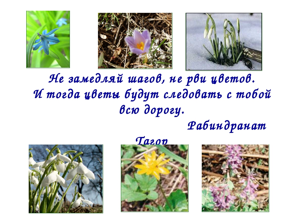 Не замедляй шагов, не рви цветов. И тогда цветы будут следовать с тобой всю д...