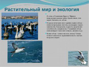 Растительный мир и экология Из птиц, вСолнечном Береге у Чёрного моряраспро