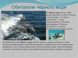 Обитатели Чёрного моря ВЧёрном мореобитает 2500 видов животных (из них 500