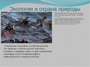 Экология и охрана природы ПобережьеЧёрного моряи реки, плотно заселены чело