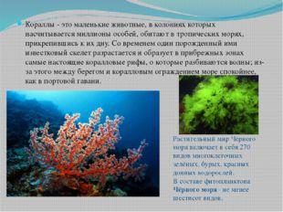 Кораллы - это маленькие животные, в колониях которых насчитывается миллионы о