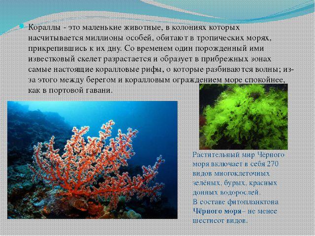 Кораллы - это маленькие животные, в колониях которых насчитывается миллионы о...