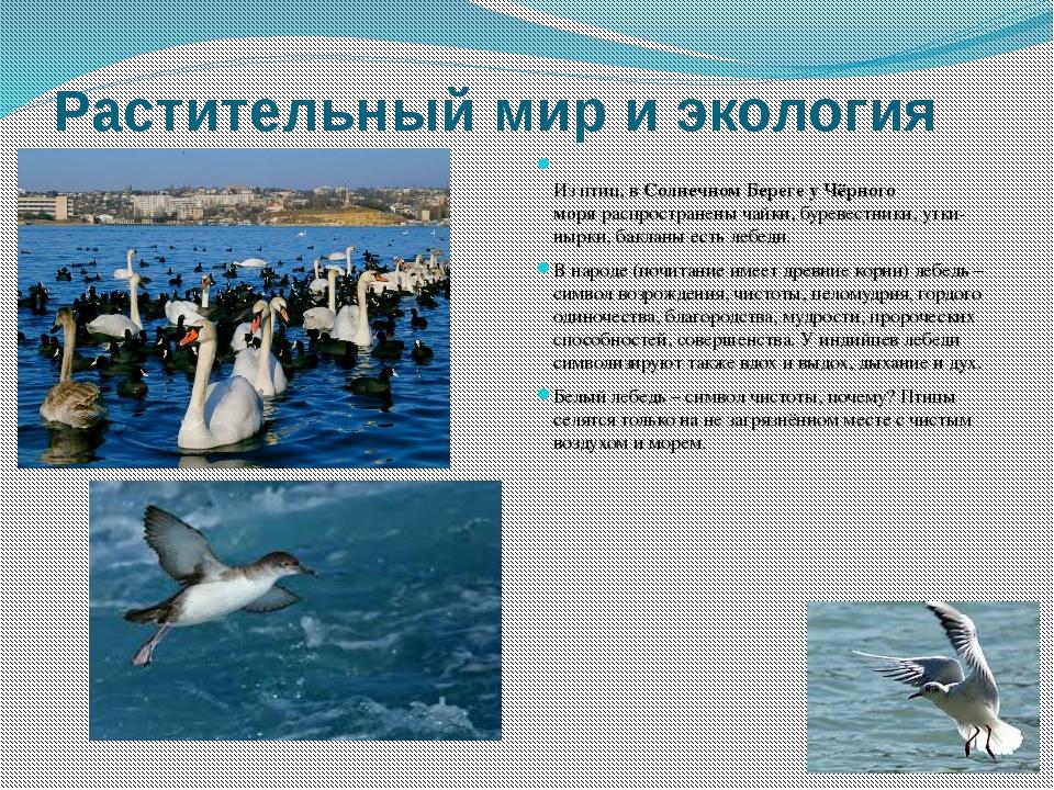 Растительный мир и экология Из птиц, вСолнечном Береге у Чёрного моряраспро...