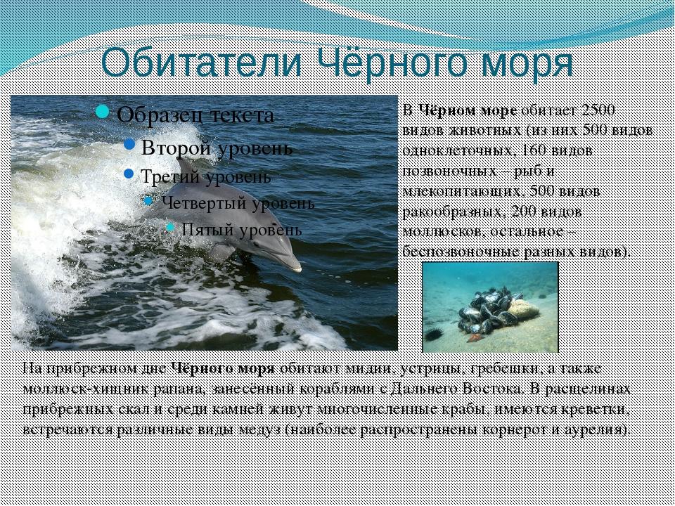 Обитатели Чёрного моря ВЧёрном мореобитает 2500 видов животных (из них 500...