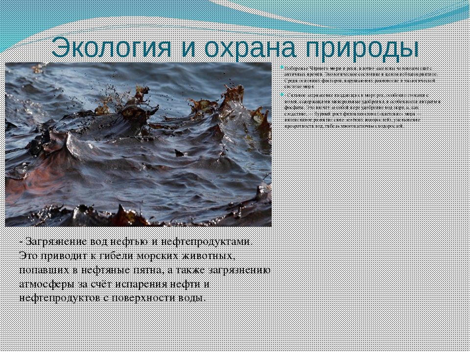 Экология и охрана природы ПобережьеЧёрного моряи реки, плотно заселены чело...
