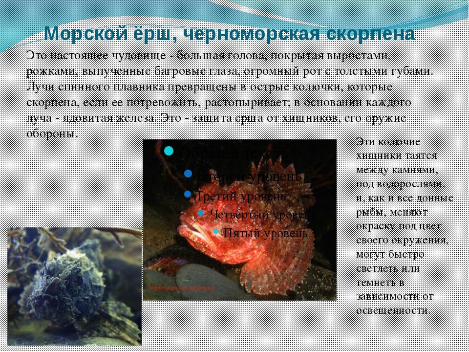 Морской ёрш, черноморская скорпена Это настоящее чудовище - большая голова,...