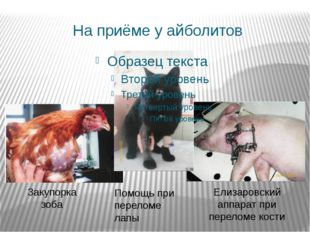 На приёме у айболитов Закупорка зоба Елизаровский аппарат при переломе кости