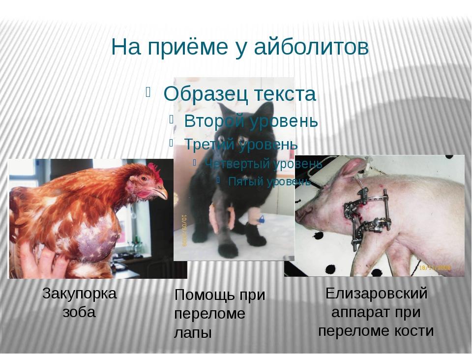 На приёме у айболитов Закупорка зоба Елизаровский аппарат при переломе кости...