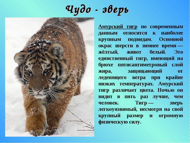 Чудо - зверь Амурский тигр по современным данным относится к наиболее крупным...