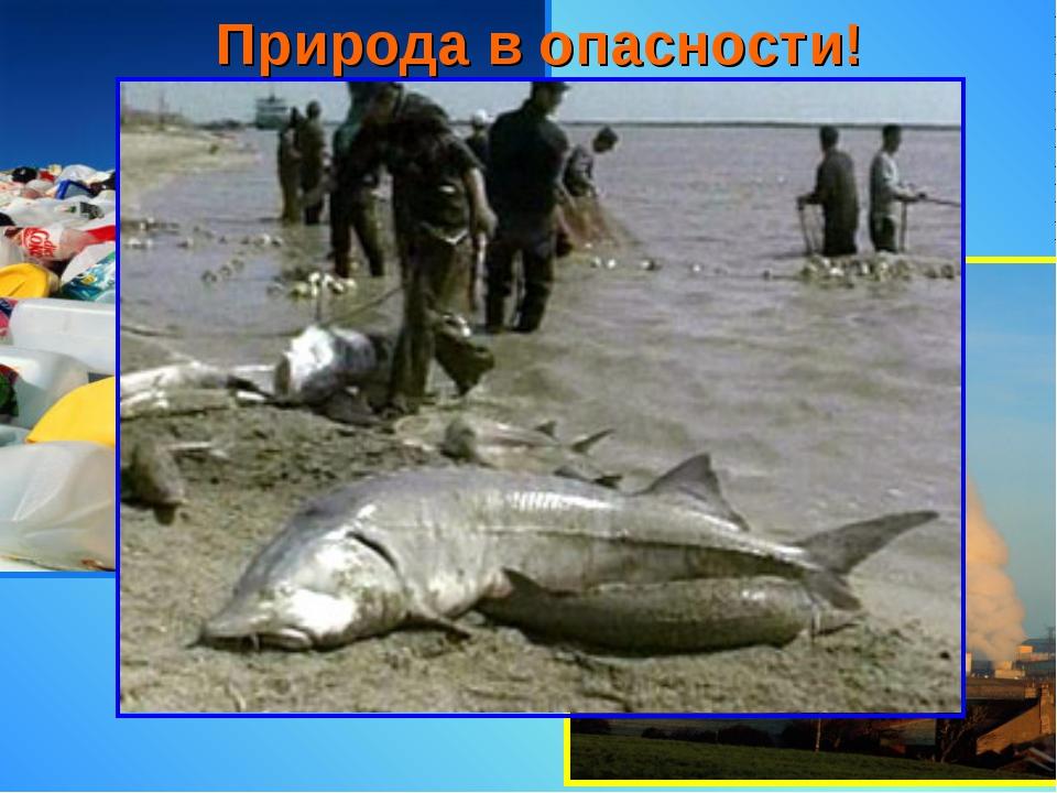 Природа в опасности!