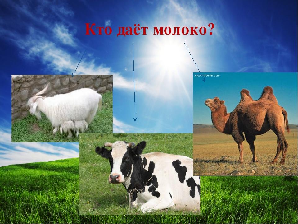 Кто даёт молоко?