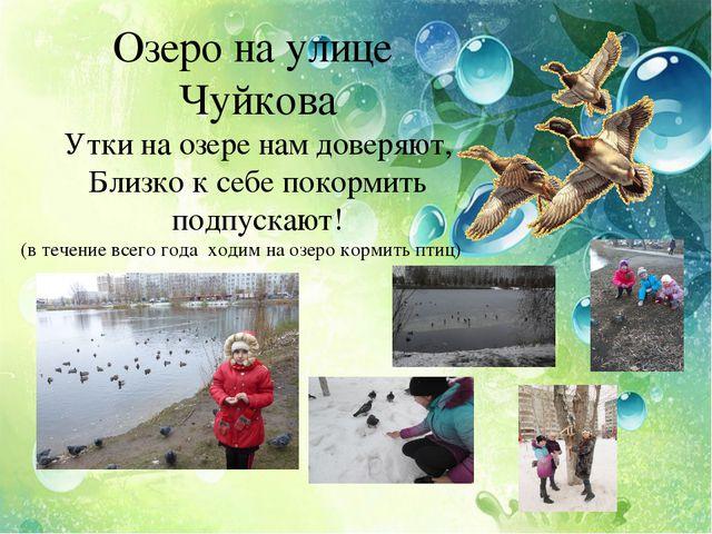 Озеро на улице Чуйкова Утки на озере нам доверяют, Близко к себе покормить п...