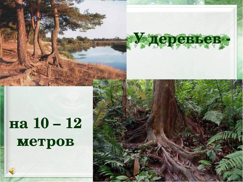 У деревьев - на 10 – 12 метров