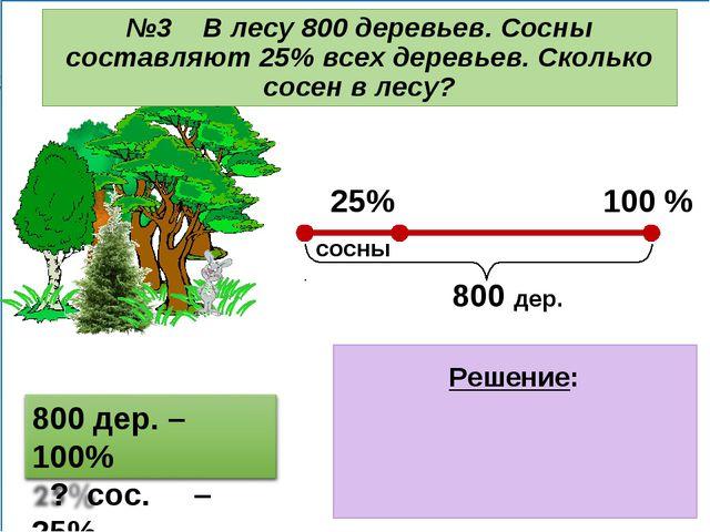 1) 800 : 100 = 8 (дер.) – 1% дер. 2) 8 . 25 = 200 (дер.) – сосны Ответ: 200...