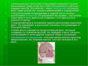 1.Большой мозг (большие полушария) управляют нашим мышлением. Даже когда мы с
