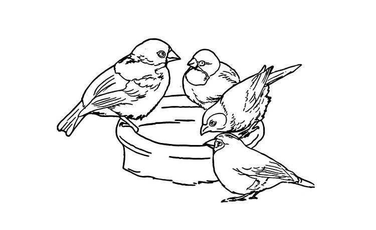 http://www.50birds.com/cbcA/ca/images/8e.jpg