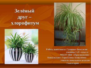 Зелёный друг – хлорофитум Работу выполнила: Гущенко Анастасия ученица 3 «Г» к