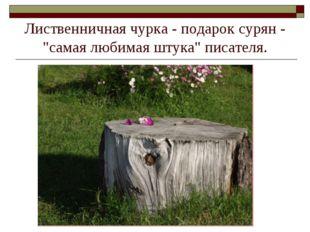 """Лиственничная чурка - подарок сурян - """"самая любимая штука"""" писателя."""