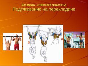 Для мышц – сгибателей предплечья Подтягивание на перекладине