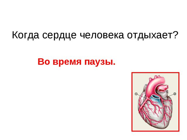Когда сердце человека отдыхает? Во время паузы.