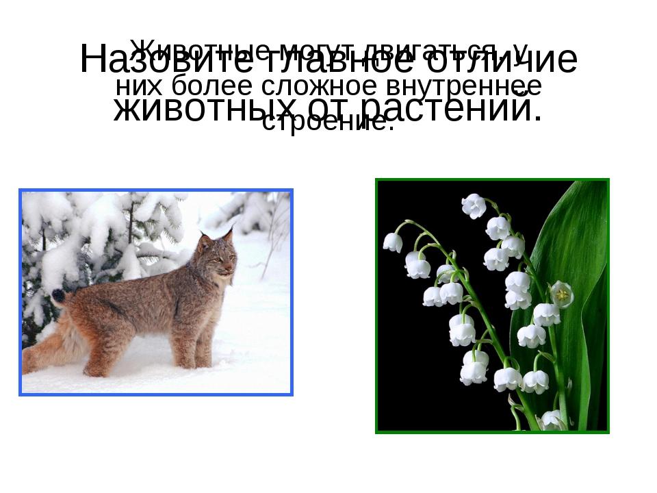 Назовите главное отличие животных от растений. Животные могут двигаться, у ни...