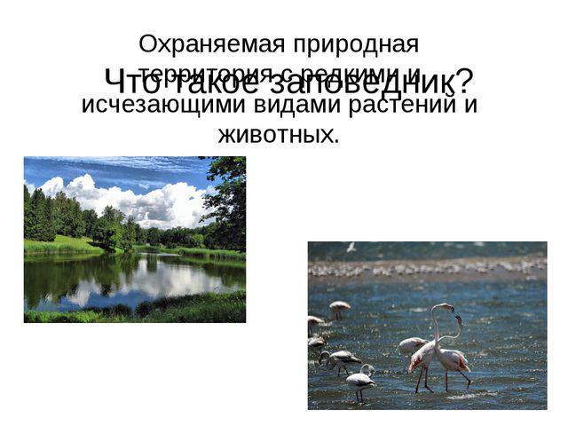 Что такое заповедник? Охраняемая природная территория с редкими и исчезающими...