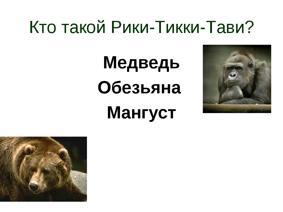 Кто такой Рики-Тикки-Тави? Медведь Обезьяна Мангуст