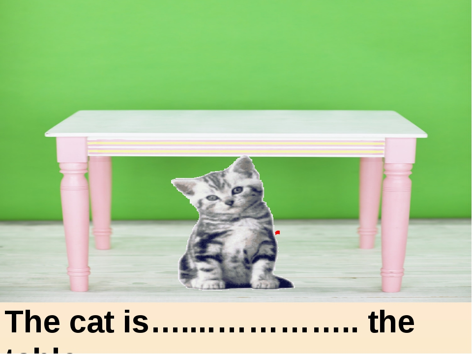 under The cat is…....………….. the table. under