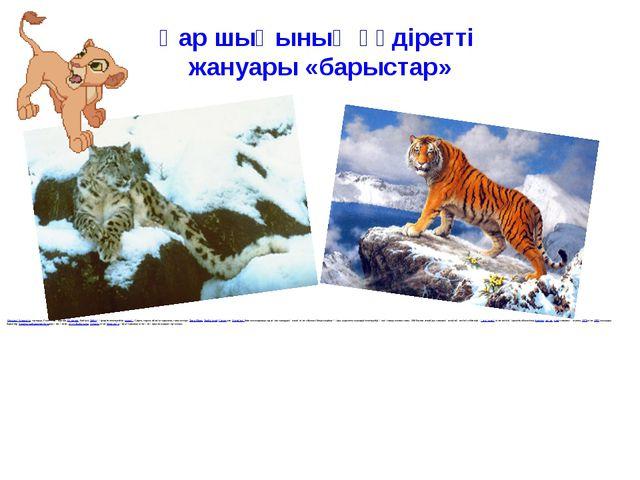 Қар шыңының құдіретті жануары «барыстар» Орталық Азиядағытауларда, Солтүс...