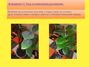 Эксперимент 3. Уход за комнатными растениями. Внешний вид комнатных растений