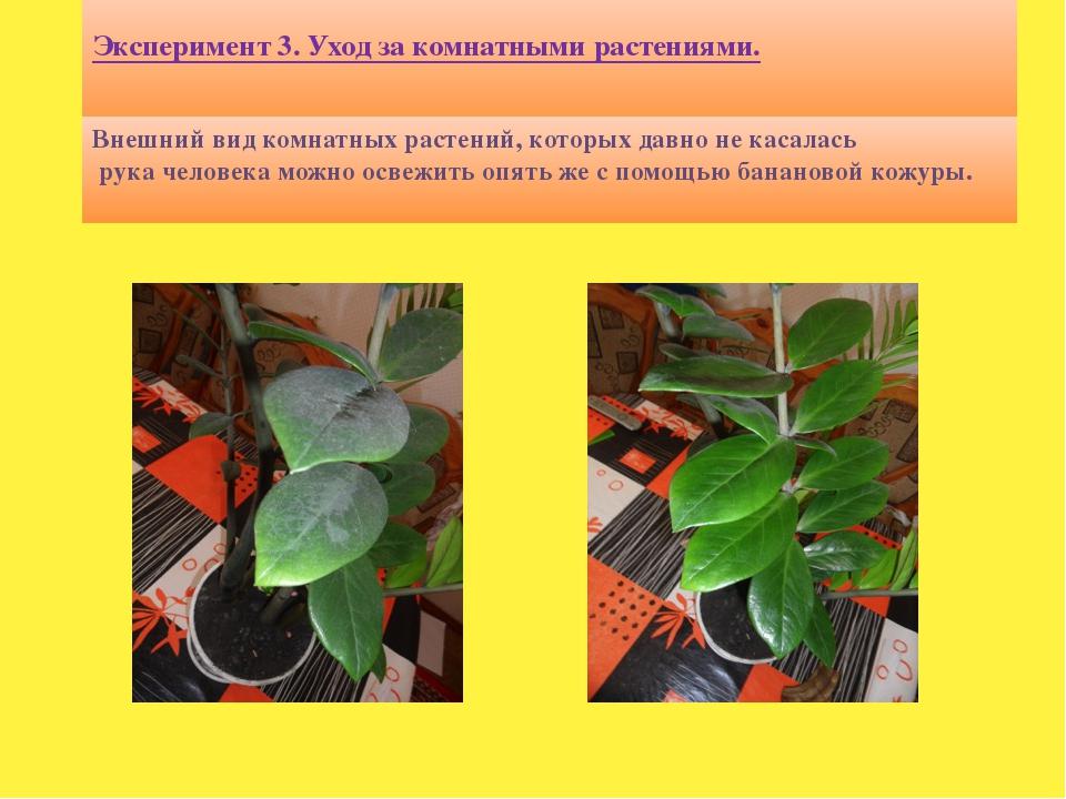 Эксперимент 3. Уход за комнатными растениями. Внешний вид комнатных растений...