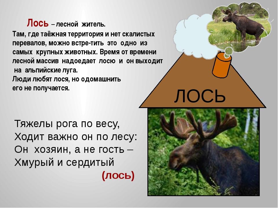 жителями знакомства стихах лесными с в