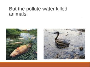 But the pollute water killed animals
