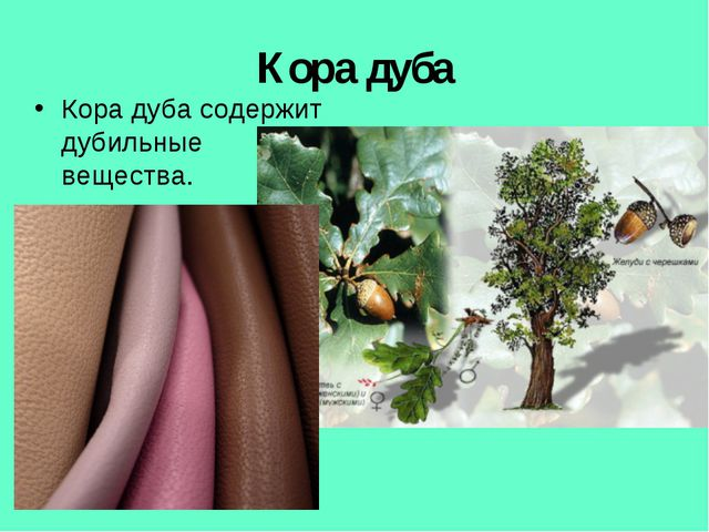 Кора дуба Кора дуба содержит дубильные вещества.