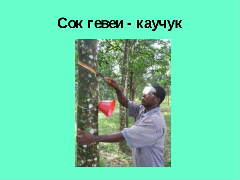 Сок гевеи - каучук