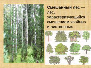 Смешанныйлес— лес, характеризующийся смешением хвойных илиственных древес