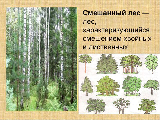 Смешанныйлес— лес, характеризующийся смешением хвойных илиственных древес...