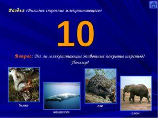 Раздел «Внешнее строение млекопитающего» Вопрос: Все ли млекопитающие животны
