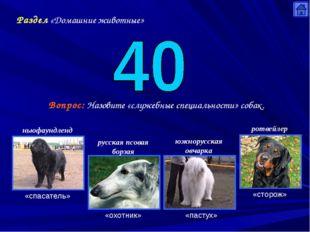 Раздел «Домашние животные» Вопрос: Назовите «служебные специальности» собак.