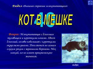 Раздел «Внешнее строение млекопитающего» Вопрос: Млекопитающее с длинным туло