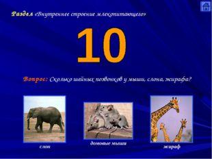 Раздел «Внутреннее строение млекопитающего» Вопрос: Сколько шейных позвонков