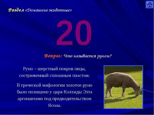Раздел «Домашние животные» Вопрос: Что называется руном? Руно – шерстный покр...