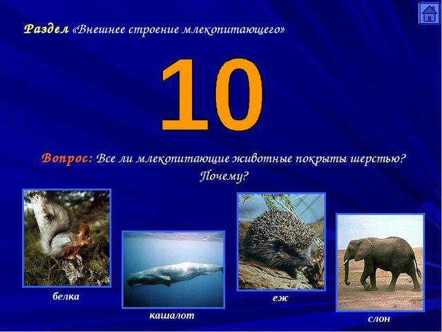 Раздел «Внешнее строение млекопитающего» Вопрос: Все ли млекопитающие животны...