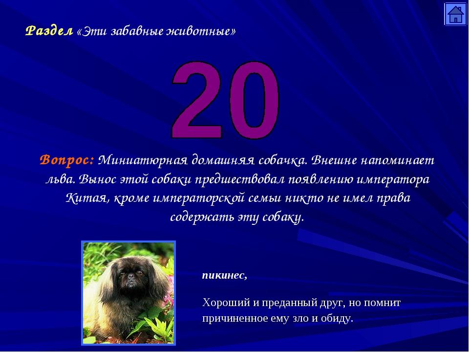 Раздел «Эти забавные животные» Вопрос: Миниатюрная домашняя собачка. Внешне н...